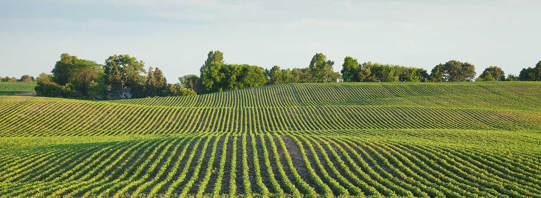 An image of a beautiful field.