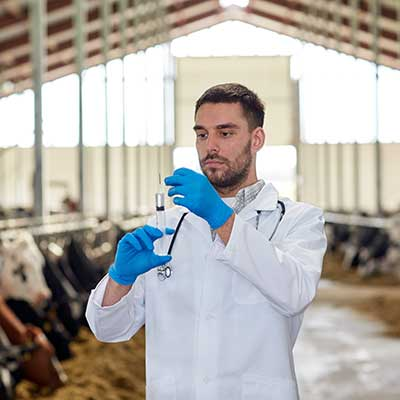 A veterinarian perparing a vaccine for an animal.