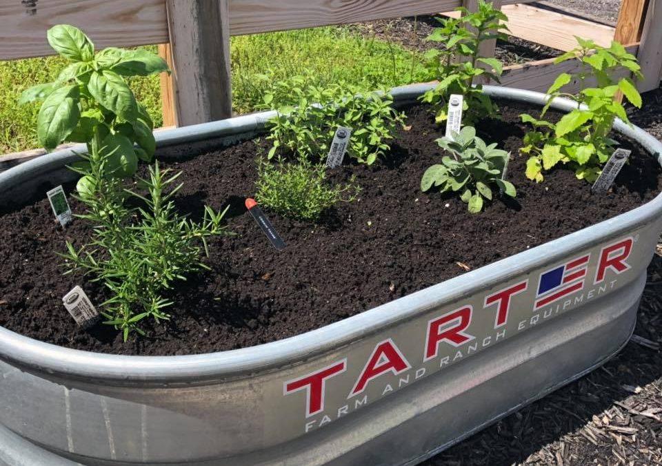 DIY Stock Tank Herb Garden